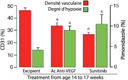 Figure 2. Tumeurs RIP-Tag2 : densité vasculaire et degré d'hypoxie après traitement anti-angiogénique