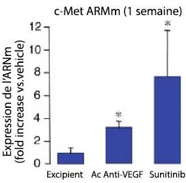 Figure 3. Tumeurs RIP-Tag2 : expression de c-MET après traitement antiangiogénique